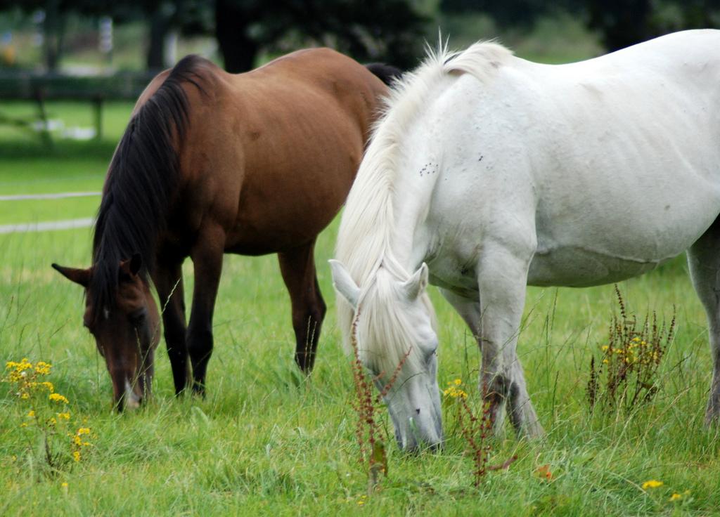 Paard en pony quiz vragen quizvragen test huisdieren kennis quiz - Afbeelding in ...